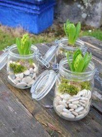 Plantes dans des bocaux qui servent de pots
