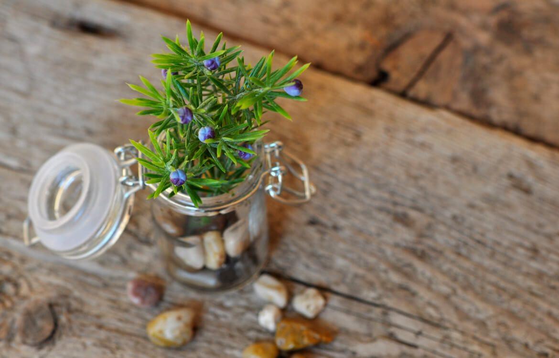 Bocal utilisé comme vase pour plante de montagne