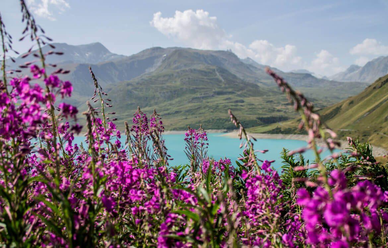 Fleurs des Alpes  les fleurs sauvages de nos montagnes