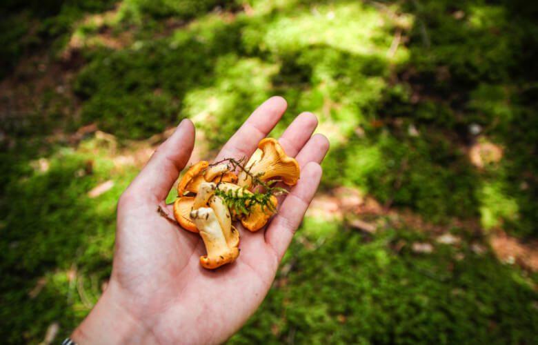 Cueillette de champignons en montagne