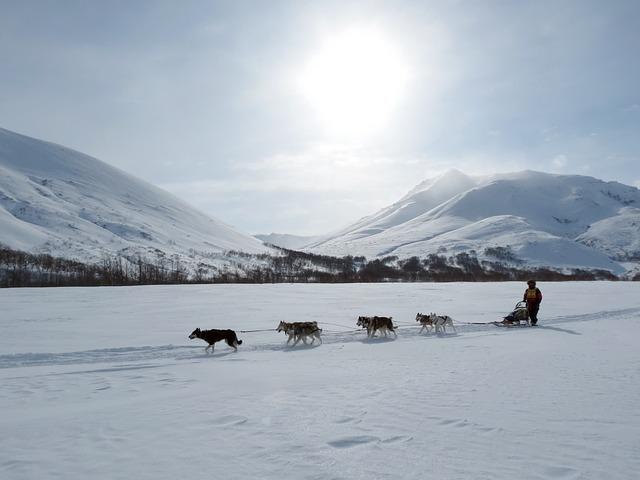 Mariage en chien de traîneau à la montagne