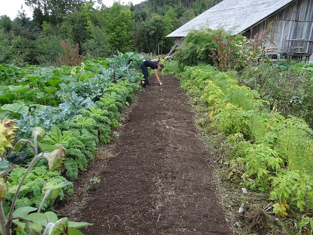 culture de potager bio utilisant les insectes