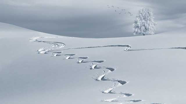 traces de ski alpin dans la neige